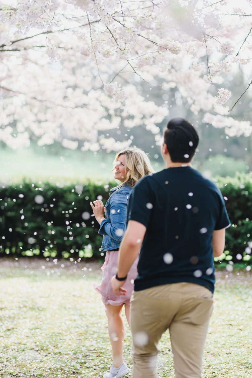 engagement photo shoot taken at High Park in Toronto during cherry blossoms