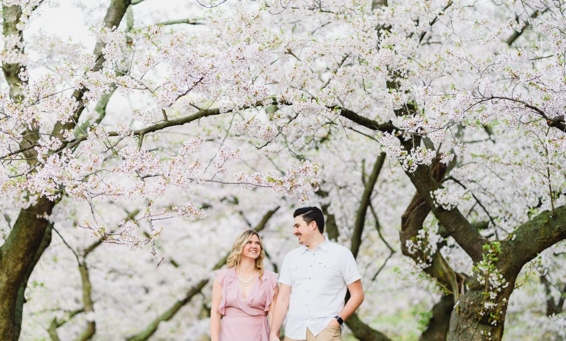 engagement pictures taken during cherry blossom season in High Park, Toronto