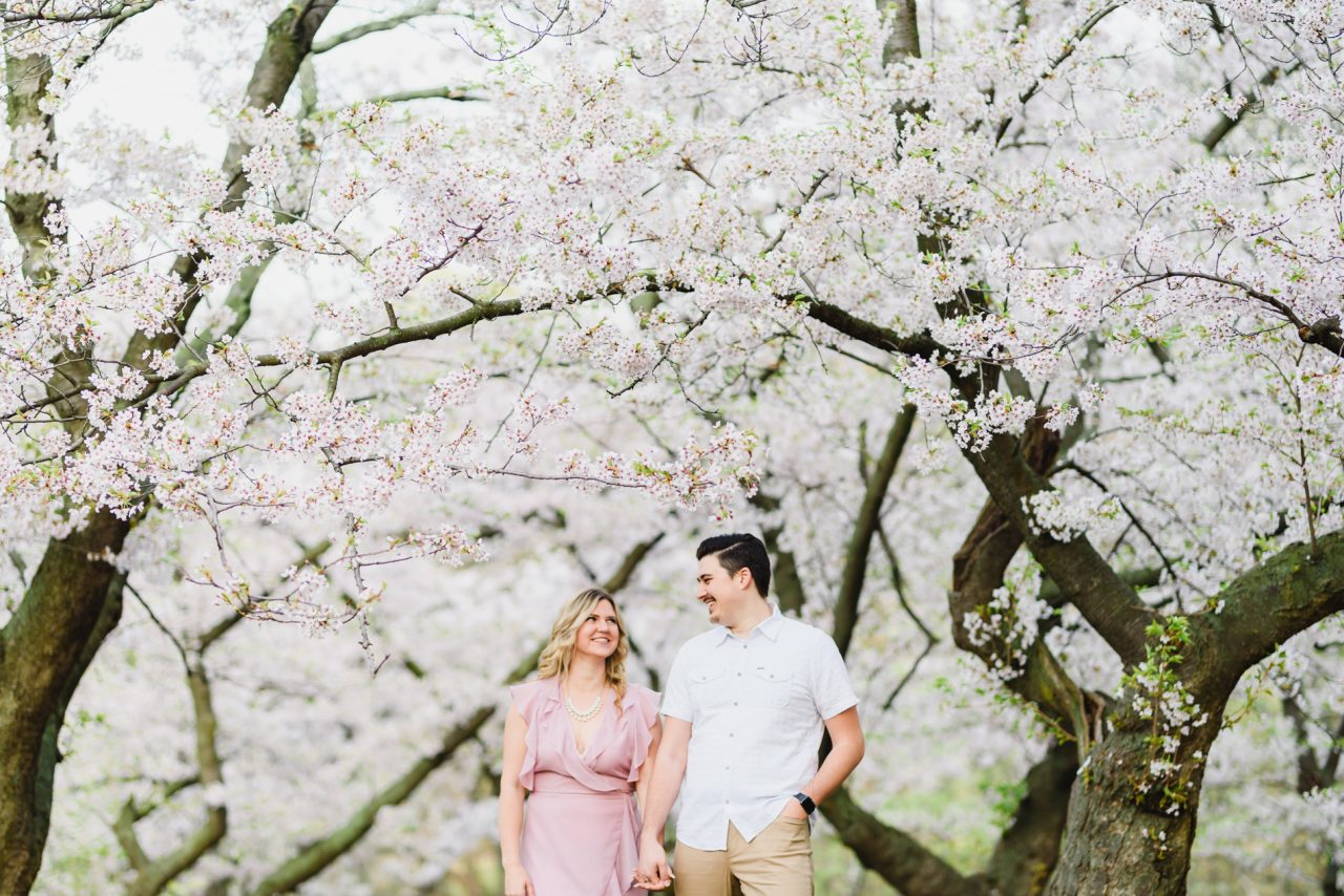 engagement pictures taken during Toronto cherry blossom season in High Park,